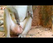 GP Monkey