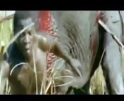 prey, predator, prey vs predator, wild, animal, animals, predator vs prey, defend, wildlife, nature, strong animals, strongest animals, top 10 preys, lion, rhino, rhinoceros, elephant, zebra, buffalo, buffaloes, giraffe, warthog, porcupine, gazelle, wildebeest, biggest animals, largest animals, fastest animals, lion vs buffalo, buffalo vs lionanimals attacks 2021, animals 2021, animals, animals attacks, wild animal attacks, lion vs buffalo, buffalo vs lionKruger, national, park, Animals, animal, Wildlife, Kruger national park, eating, Battle, south africa, Kruger Park, Africa, hunt, attack, kill, safari, Game Reserve, nature, chase, territory, watch latest sightings animatedcams videos